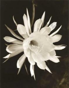 大淵環写真展「フローラ・フローラ 愛する花たちに」