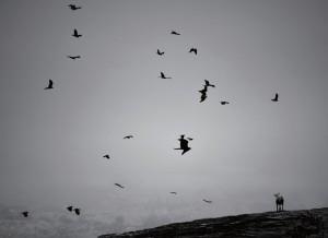 MOTOKI写真展「NORAINU」