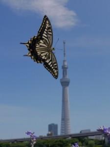 関洋写真展「都市蝶2011〜2013」