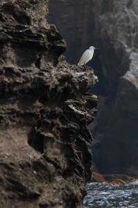 松本立夫写真展「花と海岸を巡る-三浦半島」