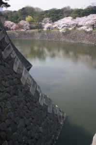 松本立夫写真展「皇居東御苑、都心の春」