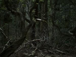 木下悠写真展「東の島」