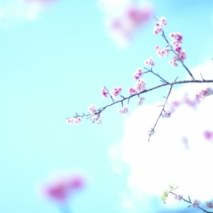 vol.2 沖縄本島北部編|日本一早く咲く桜に出会う旅