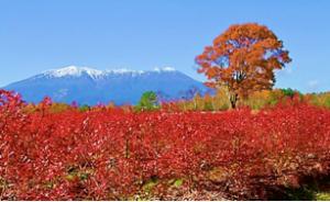 木曽の御岳山(平成25年11月8日 噴火の11か月前)