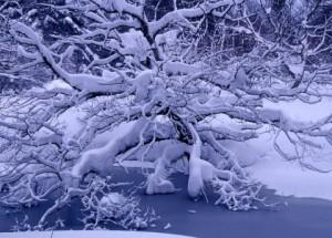 鈴木とみ子写真展「自然のままに -裏磐梯の四季-」