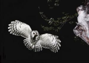 水野紘一写真展「野鳥讃歌」写真展Ⅴ