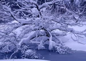 鈴木とみ子「自然のままに―裏磐梯の四季―」
