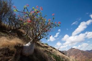 木原浩写真展「世界植物記 アフリカ・南アメリカ編」