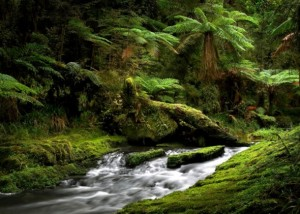 世界遺産の森と木フォトコンテスト入賞作品展