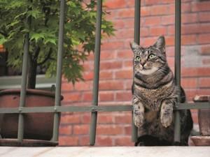 岩合光昭の世界ネコ歩き写真展