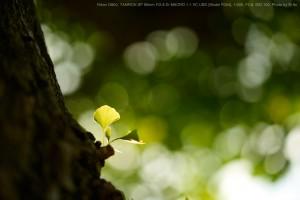 写真:M.Ito