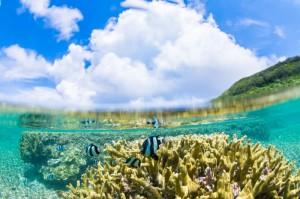 水中と陸上、2つの景色を魚眼レンズで同時に写し込む(山下峰冬×海)