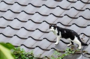"""荻窪圭の""""這いつくばって猫に近づけ"""""""