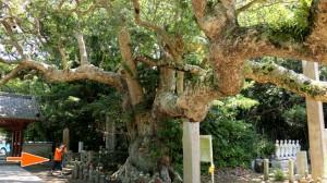 「巨樹」で写真のトレーニング